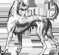 Long-Dog-Samplers