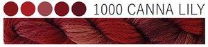 Canna Lily CGT 1000