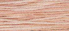 Hibiscus WDW 2278