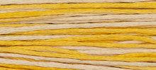 Mimosa WDW 2231