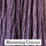 Blooming Crocus CCW