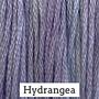 Hydrangea CCW